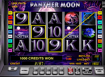 Panther Moon 6